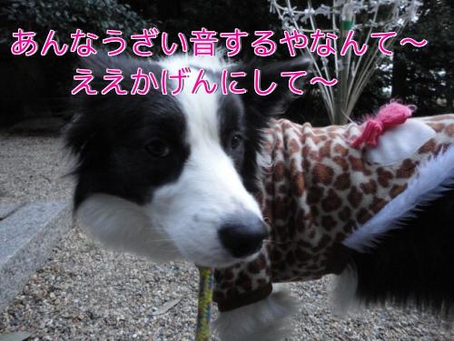 36_20110103202432.jpg