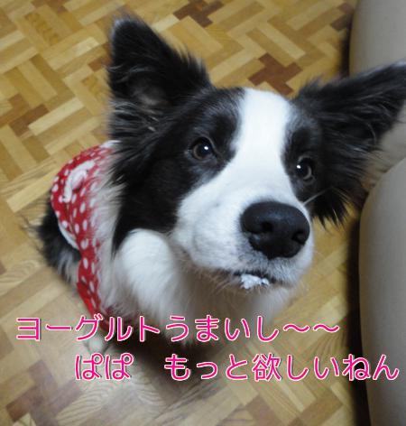 39_20110103202051.jpg