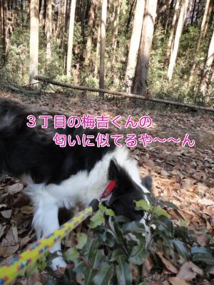 3u_20110203212841.jpg