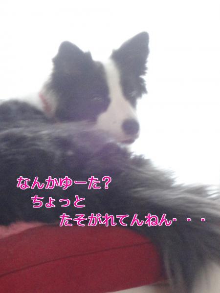 4f_20100808194036.jpg