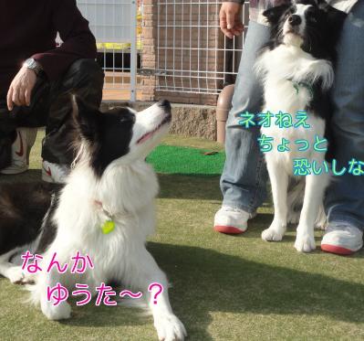 81_20101208155000.jpg