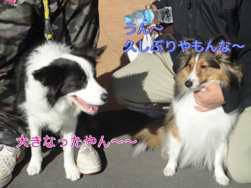 85_20101208154815.jpg