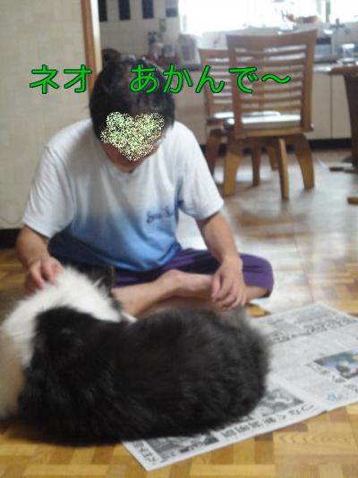 8q_20100912083612.jpg