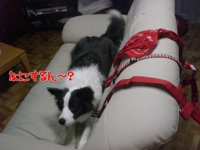 b1_convert_20100115222050.jpg