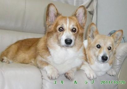 14yukirabu1.jpg