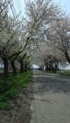 h23,5,8龍太と散歩01_1