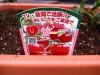 h23,5,21家庭菜園05_1