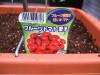 h23,5,21家庭菜園04_1