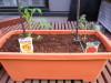 h23,5,21家庭菜園01_1