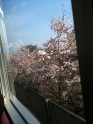 cherryfromjr.jpg