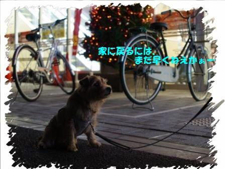 011-1_20101121105916.jpg