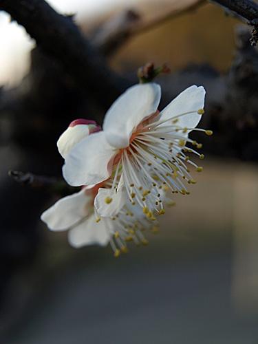 春探し-2