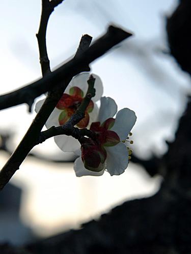 春探し-3