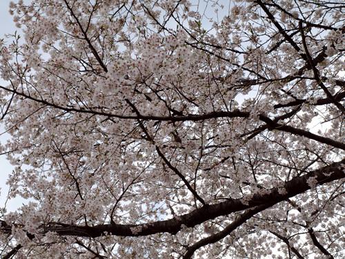 野毛山0406-8