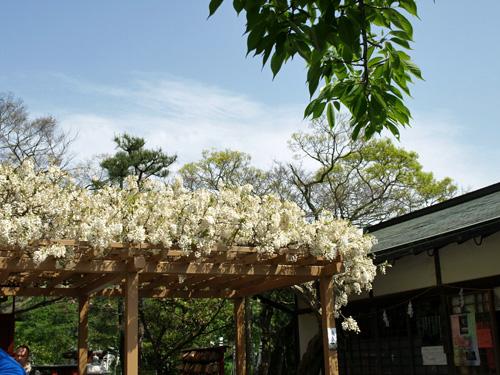 鎌倉大仏-14