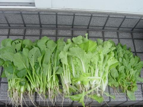 第1期収穫2