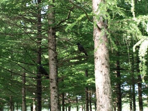 森林演習A