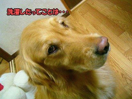 SANY0017_20100330105836.jpg