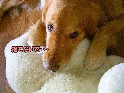 SANY0022_20100313004416.jpg
