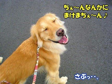 SANY0029_20100212162048.jpg
