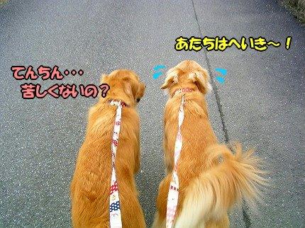 SANY0032_20100212162048.jpg