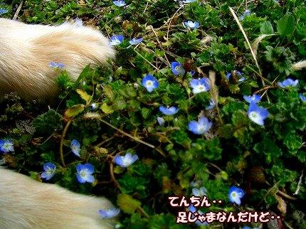 SANY0039_20100213215708.jpg