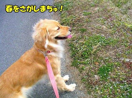 SANY0041_20100213215708.jpg