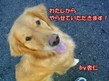 SANY0046_20100202131733.jpg