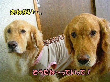SANY0054_20100206132658.jpg