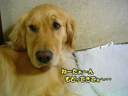 SANY0063_20100218162823.jpg