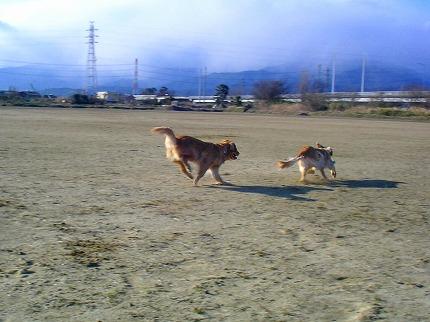SANY0084_20100220084410.jpg