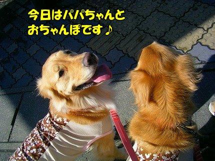 SANY0091_20100209081531.jpg