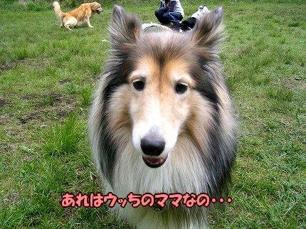 SANY7052_20100517163056.jpg