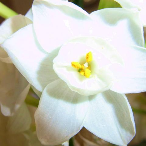 100315-FLOWER-01