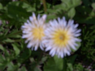 100326-white01