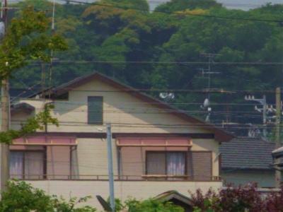 100522-sanpo02