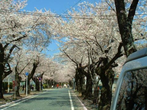 2002_桜-s