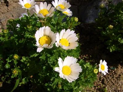 spring-00