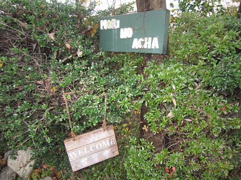 森のACHA