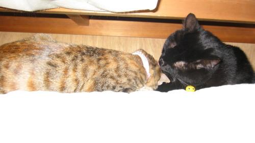 2009.11.28ルナ・小梅3