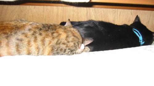 2009.11.28ルナ・小梅1