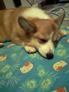 寝る寝る寝るるん
