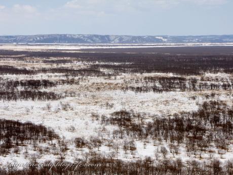 釧路湿原の風景