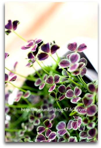 IMG_0640.jpg