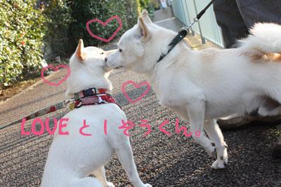 としくん2009-11-3