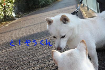 としくん2009-11-1