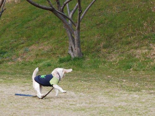 2011・03・19武庫川2