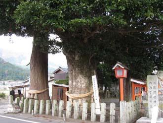 タブの木 2