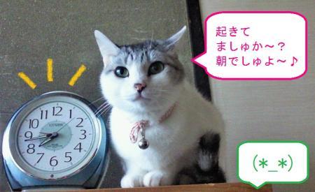 003_convert_20110424111024.jpg