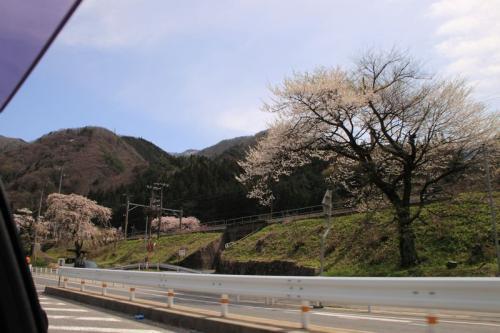 中央西線と名残の桜 2-4